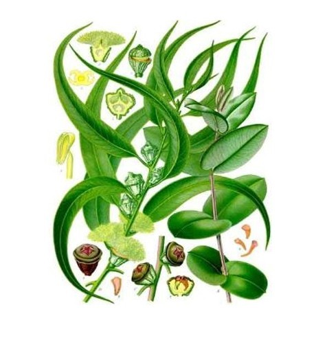 Ambientador-Eucaliptus